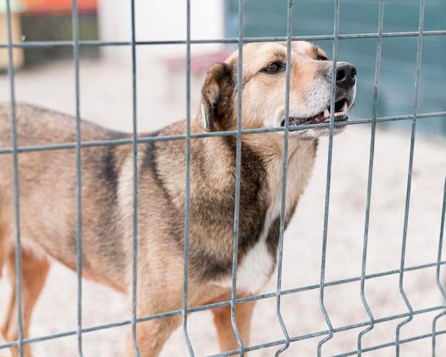 Спасательная собака для усыновления за забором в приюте