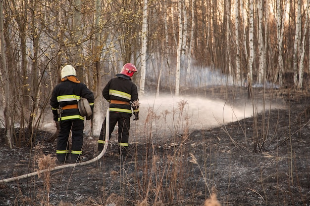Rescuers extinguish forest fire