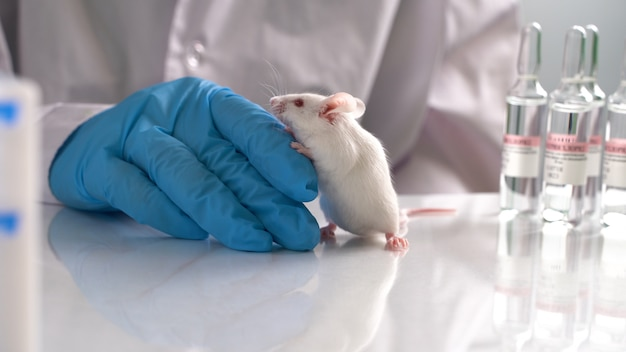 Research staff are injecting the mouse into animals,experimental animals