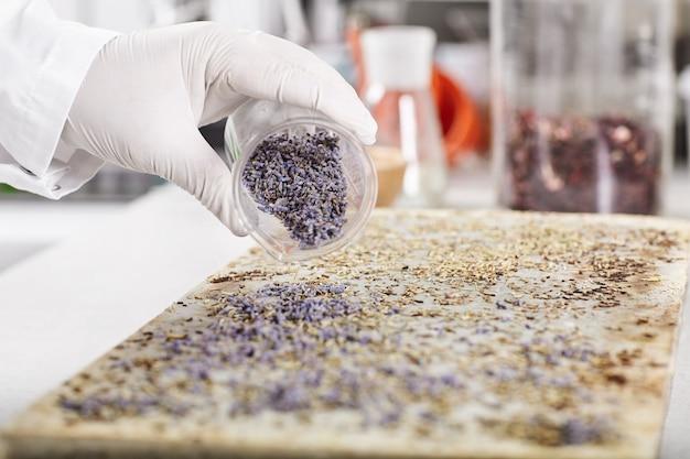 新しい種類の植生を育てる実験室の研究員