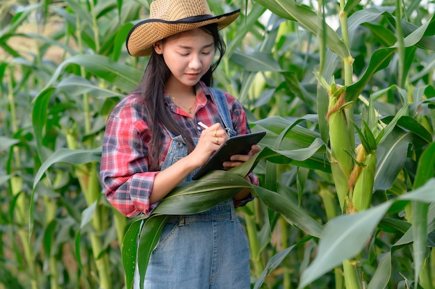 Researcher or farmer inspecting corn at his field