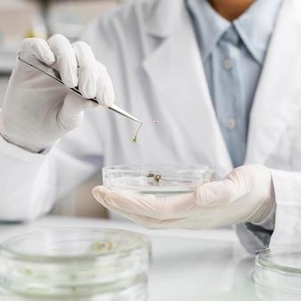 페트리 접시가있는 생명 공학 실험실 연구원
