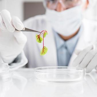 식물 및 페트리 접시가있는 생명 공학 실험실 연구원