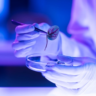 Researcher in the laboratory with petri dish and leaf