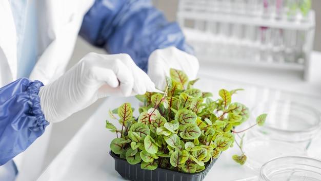 Исследователь с растением в лаборатории биотехнологии