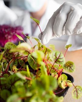 バイオテクノロジー研究所の植物を持つ研究者