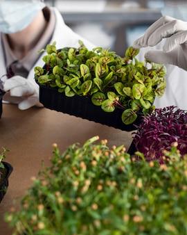 Ricercatori con piante nel laboratorio di biotecnologia
