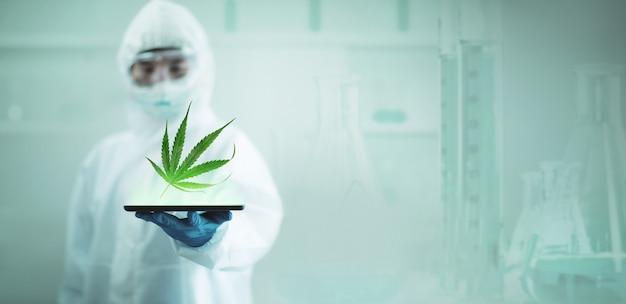 薬効のために科学研究所でマリファナまたは大麻を研究する