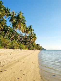 Resort on a tropical island in the ocean. palm trees on the beach. clear water. dream vacation.