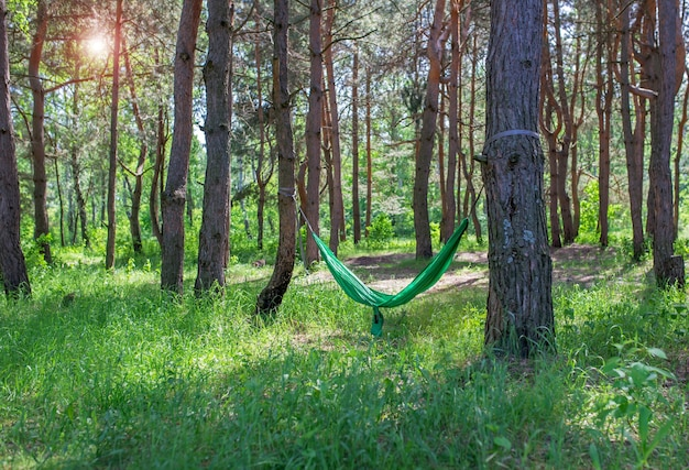 햇볕이 잘 드는 숲의 녹색 해먹에서 쉬고 있습니다.