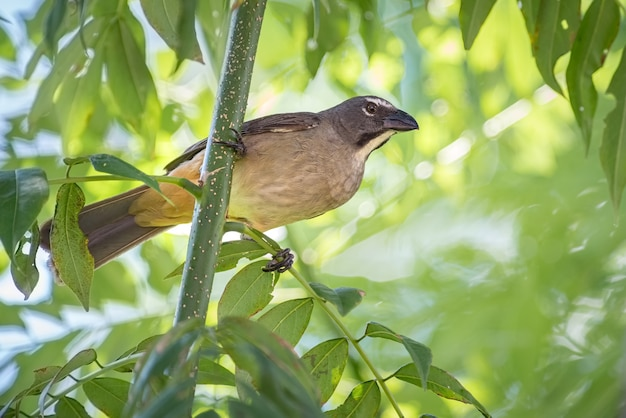 Restless bird actively searching for food among tree branches