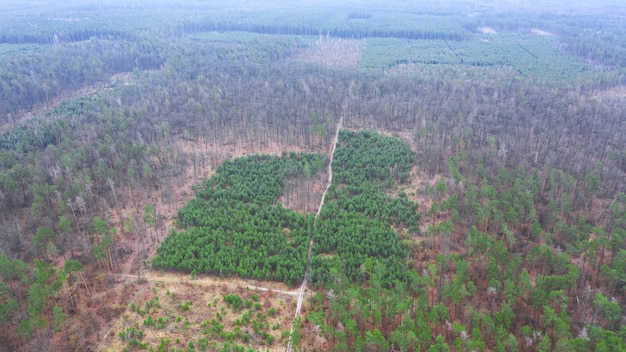 Restoration of the forest on the slope after complete felling. drone view.