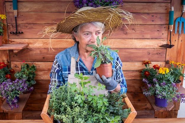 ガーデニングと薬草をバスケットに入れてセージ植物の匂いを嗅ぎながら引退した年配の女性