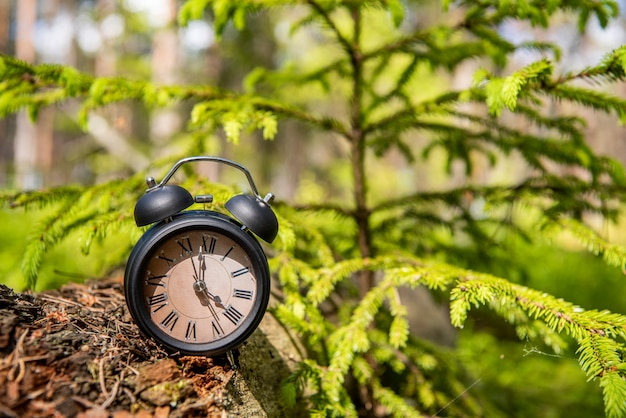 Retro alarm clock in green forest. abstract photo of time.