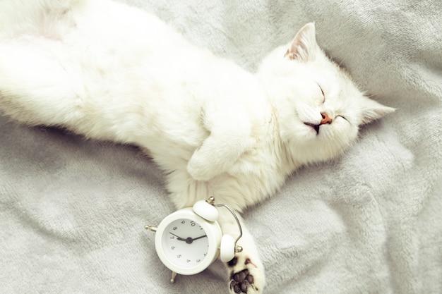 ぼやけた背景のインテリアのレトロな目覚まし時計眠っている白い子猫早朝