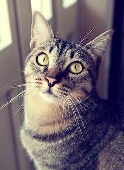 Retro portrait cat