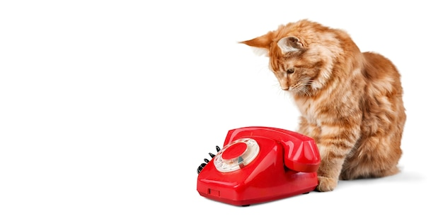 Retro red telephone with little cat