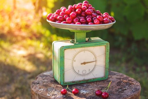 Ретро весы полные спелой красной черешни