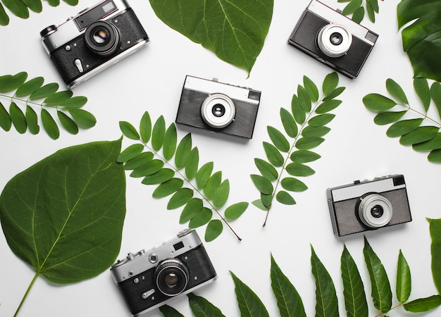 Retro style background of many retro cameras with green leaves on white paper.