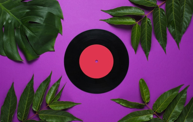 Retro style background. vinyl record among tropical green leaves on a purple background.