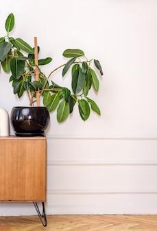 レトロなスタイルのインテリア。植木鉢に大きな観葉植物が入った古い箪笥