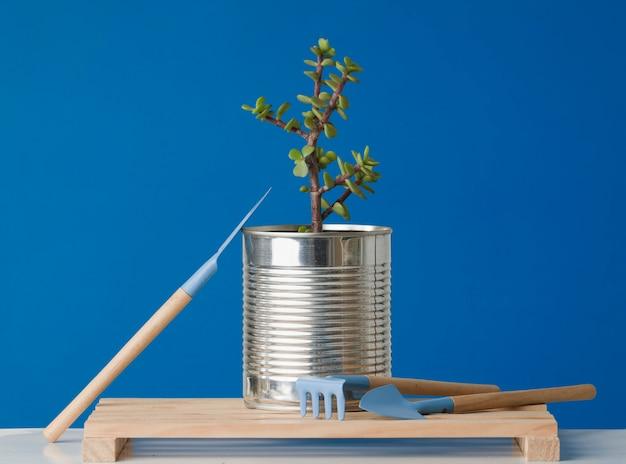 家庭でのリサイクル再利用ゼロ廃棄物で成長している植物を含む再利用されたブリキ缶