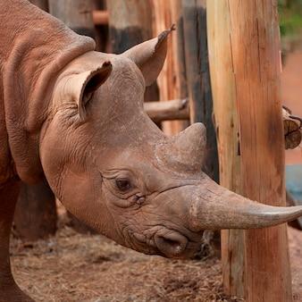 Rhino at kenya野生動物孤児プロジェクト