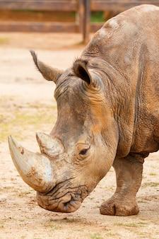 Rhinoceros 평면 초상화