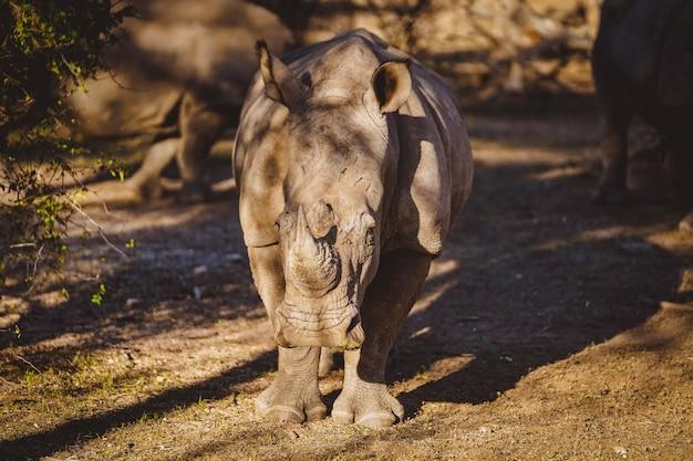 Носорог в пустыне в намибии, африка под солнечным светом
