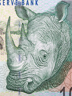Rhinoceros a portrait from south african money
