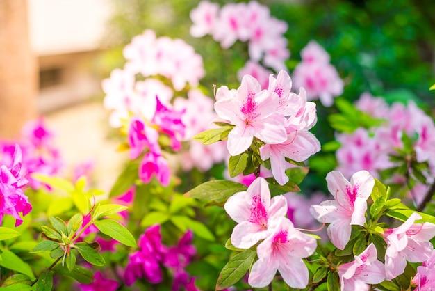太陽の背景に庭の玉虫やツツジの花。