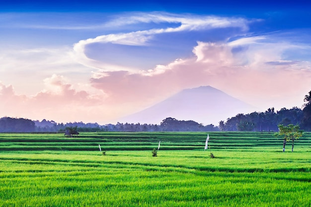 Рис и вулкан