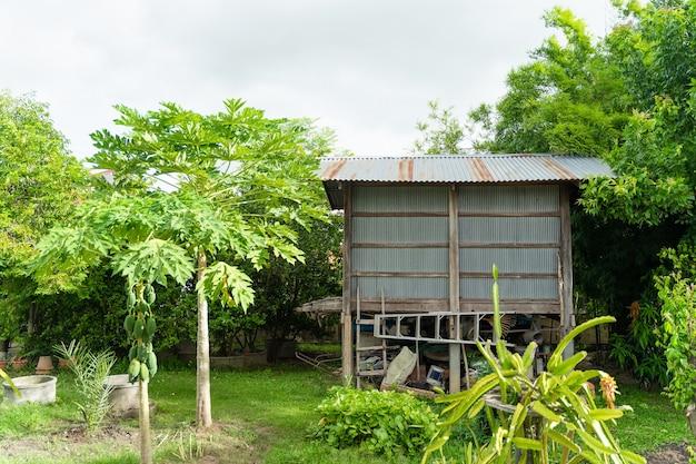 뒤뜰 지역에서 수확한 쌀의 저장 및 건조를 위한 쌀 헛간. 태국 북동부에 위치.