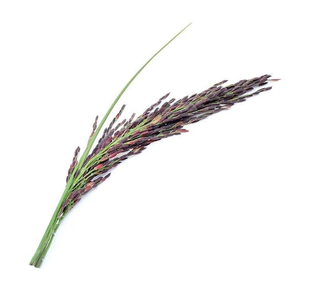 Ягода риса на белом фоне