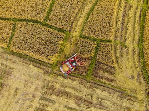 Рисовая ферма в период сбора урожая фермером с комбайнами. и трактор на рисовом поле плантации рисунка. фотография дроном с высоты птичьего полета в сельской местности