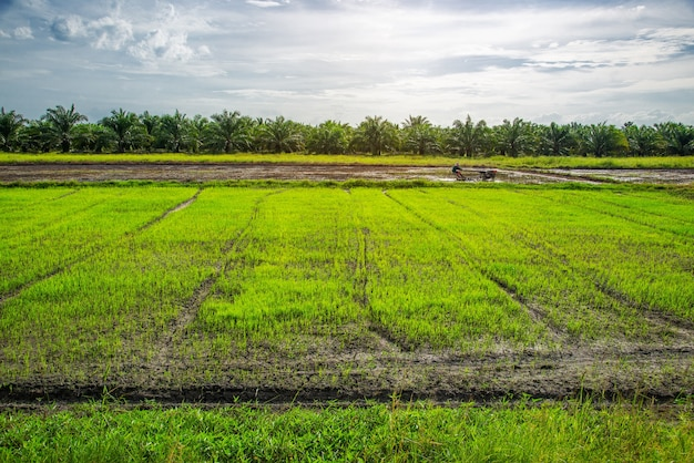 田んぼ、農業、水田、日の出または日の入りと太陽のフレア