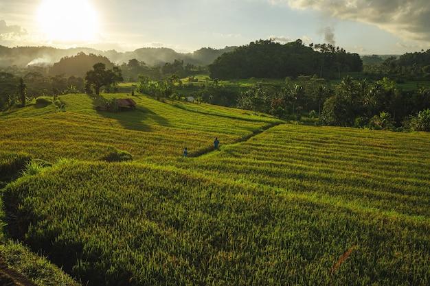 쌀 필드와 석양 빛. 인도네시아 발리.