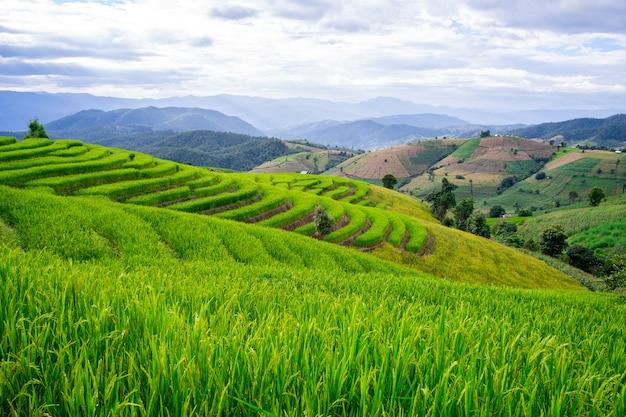 タイ、チェンマイ、メーチェム地区のボンピアン村の水田
