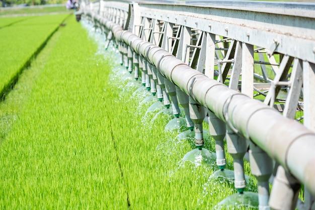 ライスフィールドグリーン農業生態系。緑の農場の水田に水をまきます。