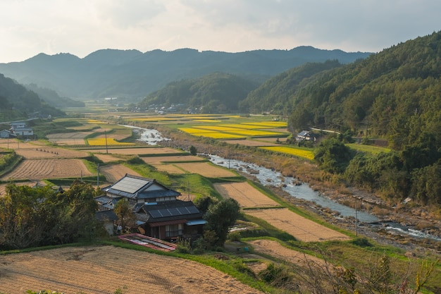 Rice field, house and aso mountain background