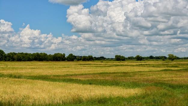 Rice field ofbago myanmar landscpae