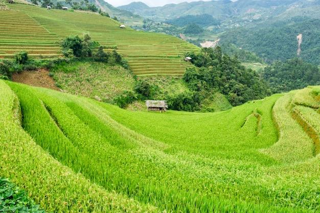 Rice field terraced on hill