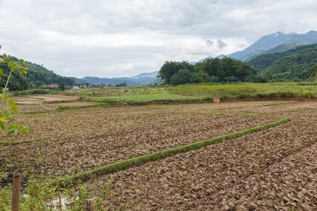 収穫後の水田は、ベトナムのジエンビエン県で田植えの準備をしています。