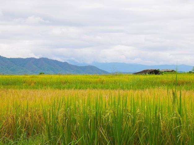 田んぼと山のある空