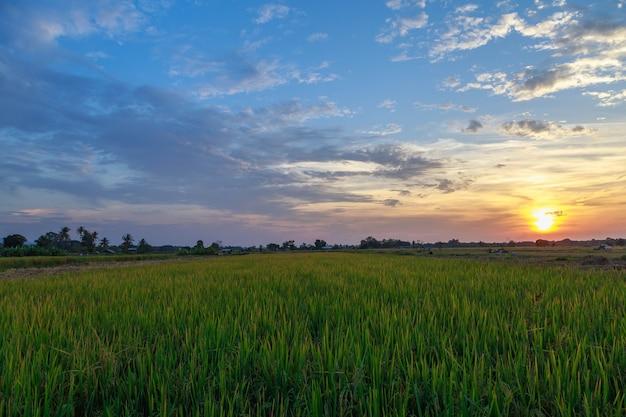 田んぼと夕焼け空の景色