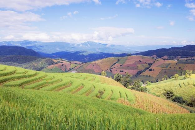푸른 하늘이있는 언덕에 논이 뻗어 나가고 있습니다.