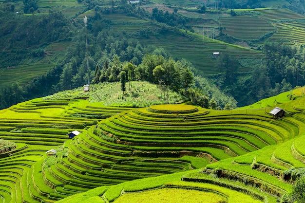 Рисовые поля на северо-западе вьетнама