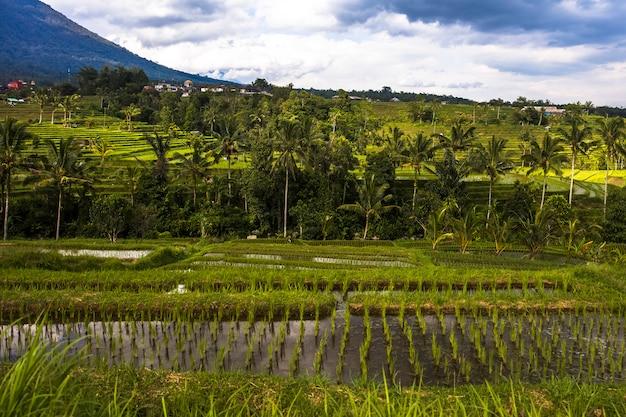 Rice fields of jatiluwih in southeast bali