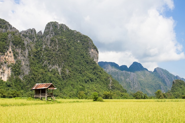 Rice fields and mountain and cabin nature