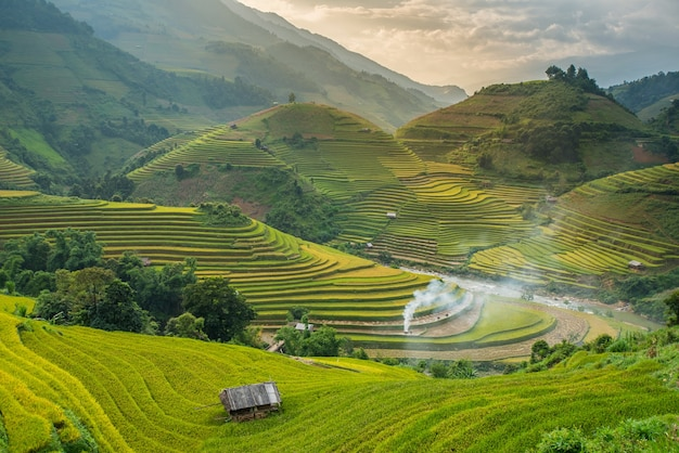 Рисовые поля на террасе на закате в туле, йенбай, вьетнам